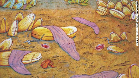 A pastel painting of Xenoturbella monstrosa, one of four new species of deep sea worm.