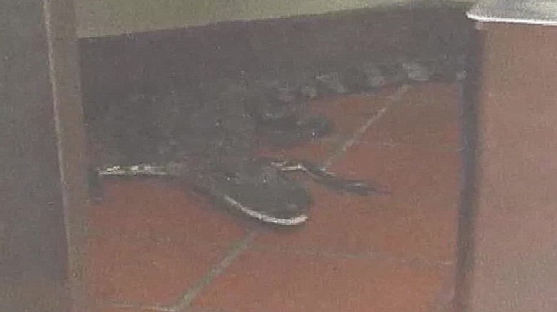 Man tosses alligator through Wendy's drive-thru