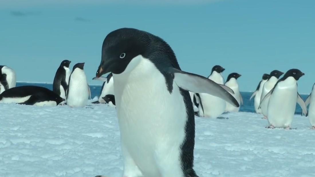 150,000 penguins perish after giant iceberg traps colony