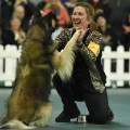 12 westminster dog show