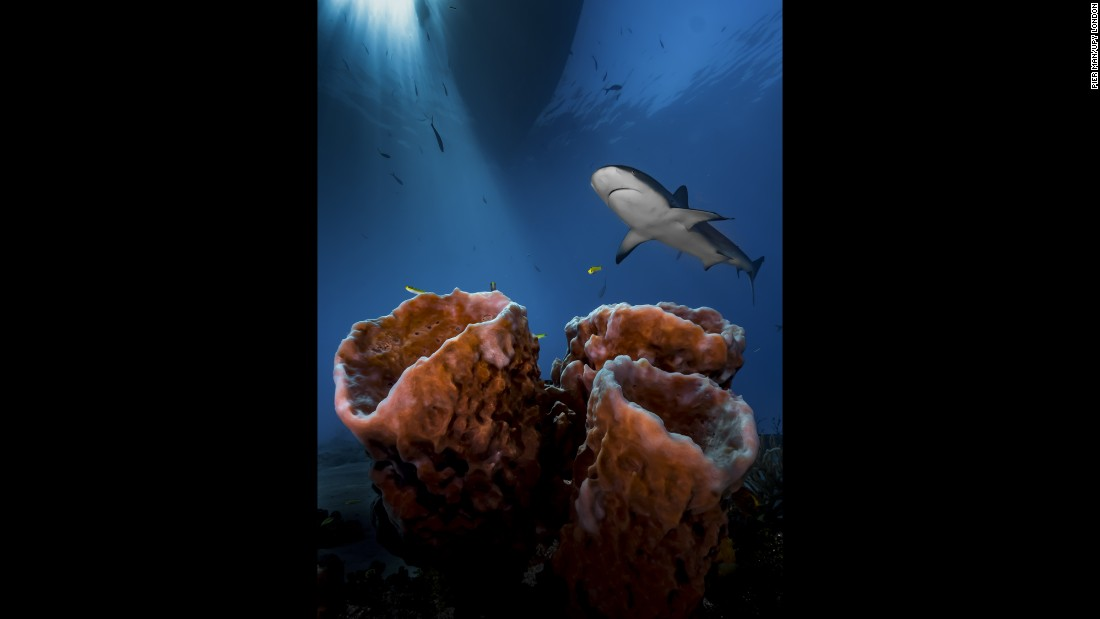 """Three Pillars -- Practice, Patience & Luck!"" won Pier Mane the Up and coming underwater photographer of the year award."