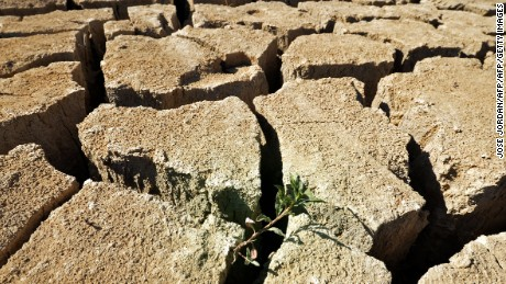 A green sprout comes out from the cracked riverbed of the Amadorio reservoir in Villajoyosa near Alicante where the water is far below usual levels due to drought, on June 25, 2015. AFP PHOTO / JOSE JORDAN        (Photo credit should read JOSE JORDAN/AFP/Getty Images)