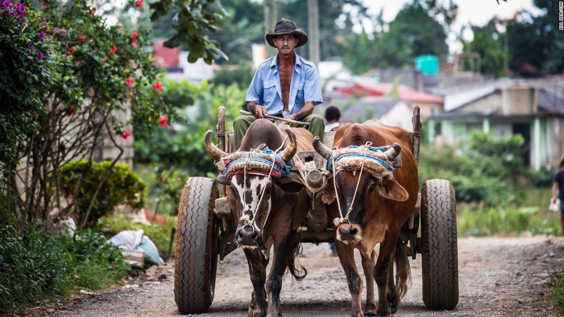 A farmer drives his oxen through the small-town streets of Viñales. Visitors to the countryside see another side of Cuba.