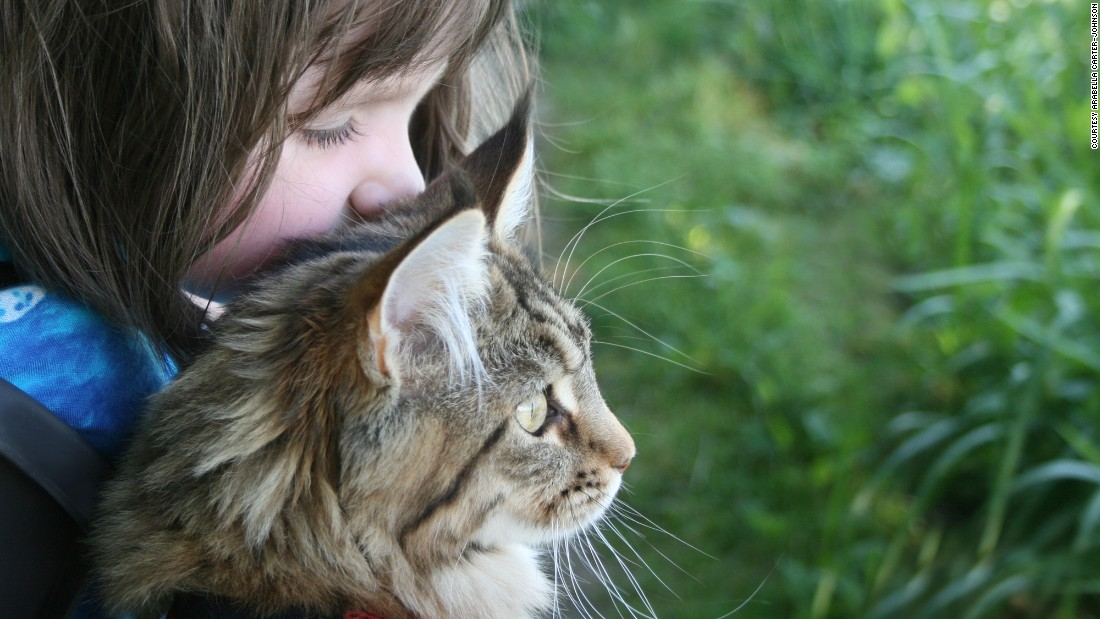 Six-year-old Iris Grace Halmshaw, who has autism, immediately bonded with Thula when her parents brought the affectionate Maine Coon kitten home two years ago. Click through our gallery to see more of their adventures.