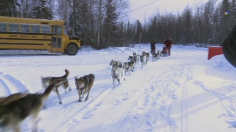 iditarod team dog killed snow machine attack bts_00004017