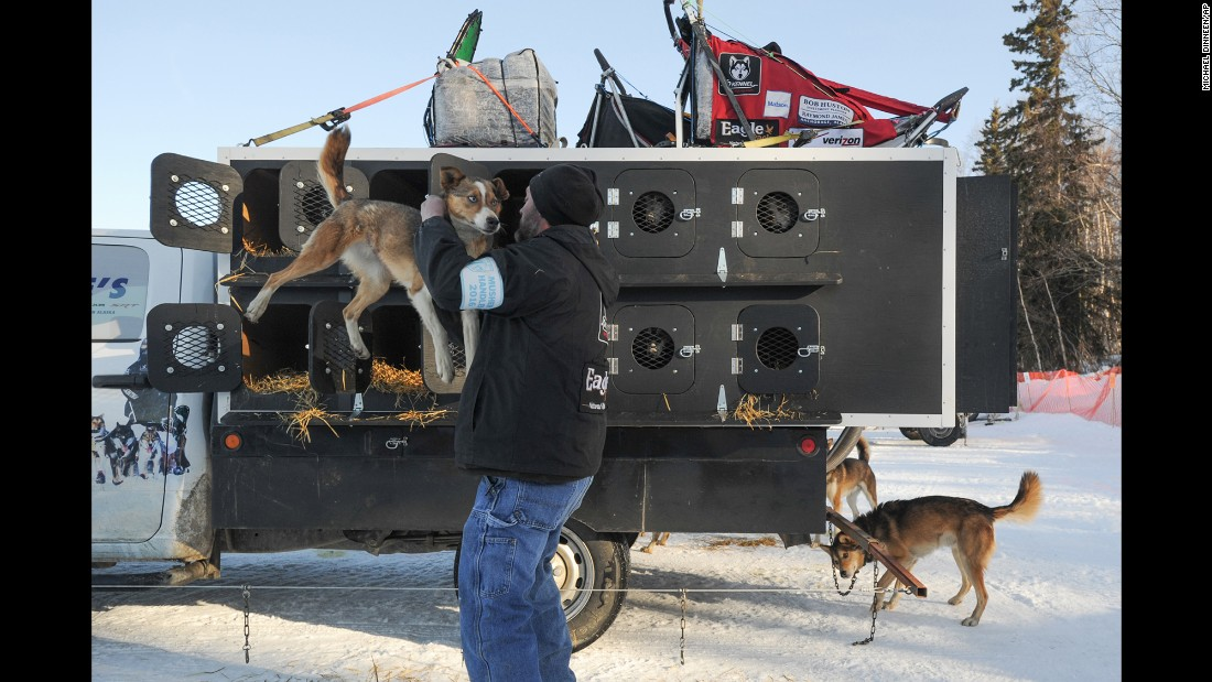 Dog handler Mark Hibma unloads an Aliy Zirkle team dog prior to the start of the race in Willow, Alaska.