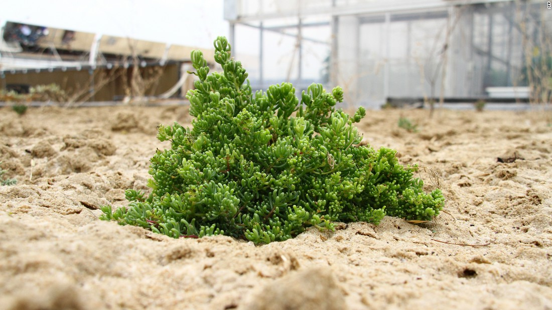 Humidity around greenhouses will be used to spur the regeneration of plant life. In a pilot project in Qatar, re-introduced plant species multiplied rapidly.