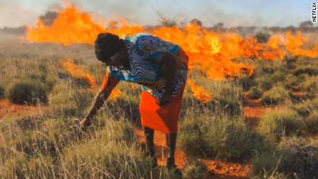 Half of the diet of the Martu is still composed of traditional bush foods.