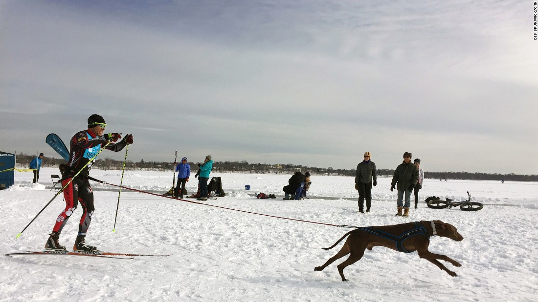 One of the largest and friendliest races in the sport of skijoring (cross country skiing with aid from dogs) in North America is the annual City of Lakes Loppet Ski Festival in Minneapolis, Minnesota.