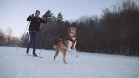 Skiing + man's best friend = skijoring, with love