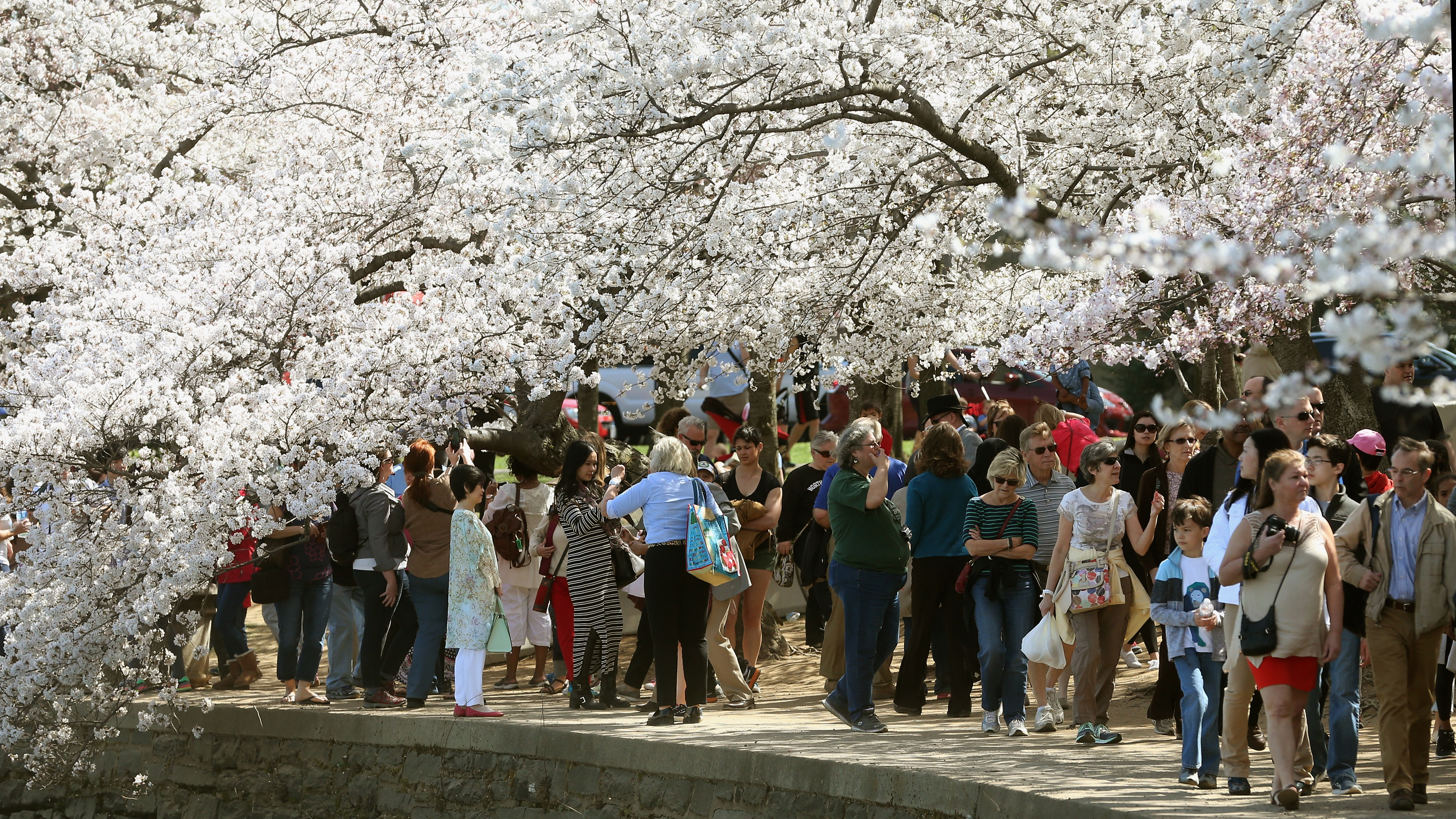 Cherry Blossoms It S Nearly Time To Head To Washington Cnn Travel