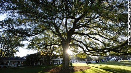 Augusta's famous old oak tree is  a popular meeting spot in front of the clubhouse.