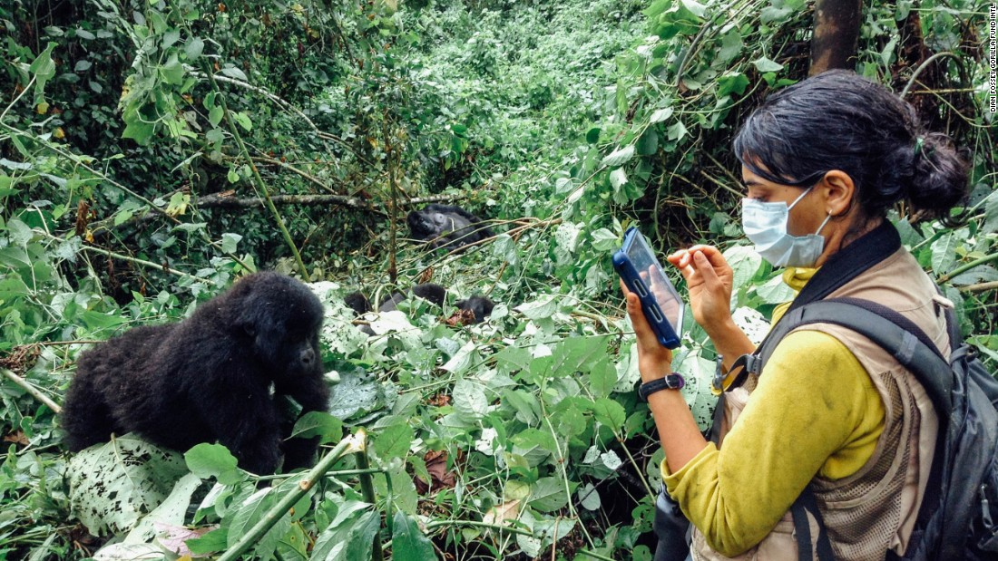 Researcher Neetha Iyer collects data on eastern lowland gorillas at Kahuzi-Biega National Park in Democratic Republic of Congo.