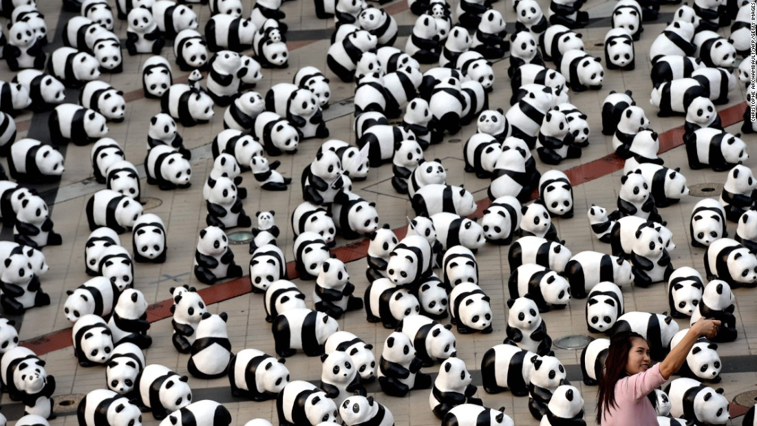 A woman takes a selfie with papier-mache pandas in Bangkok, Thailand, on Thursday, March 10. The pandas were created by French artist Paulo Grangeon to raise awareness of the endangered species.