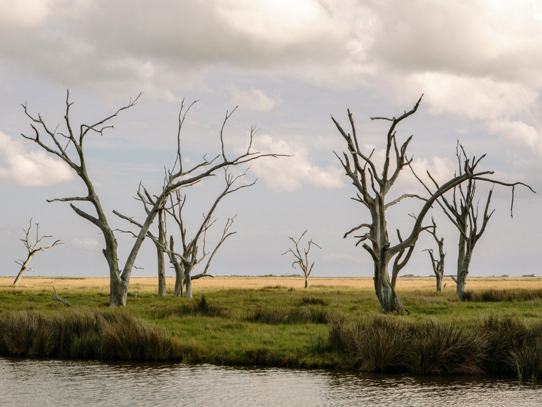 "The landscape of coastal Louisiana is marked with ""ghost trees"" that have fallen victim to saltwater intrusion."
