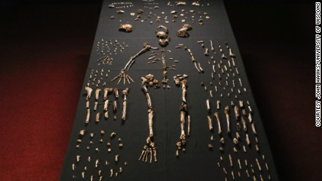 1,700 bones and teeth retrieved from a nearly inaccessible cave near Johannesburg show the skeleton of Homo naledi, pictured in the Wits bone vault at the Evolutionary Studies Institute at the University of the Witwatersrand.