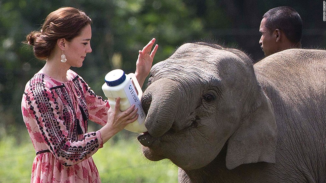 Catherine feeds a baby elephant at the Center for Wildlife Rehabilitation and Conservation on April 13.
