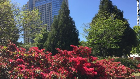 Azaleas are one of the signature flowers in the Deep South. These red ones in Centennial Olympic Park in Atlanta on Sunday, April 17, are already past their peak.