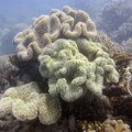 Coral bleaching Great Barrier Reef 1