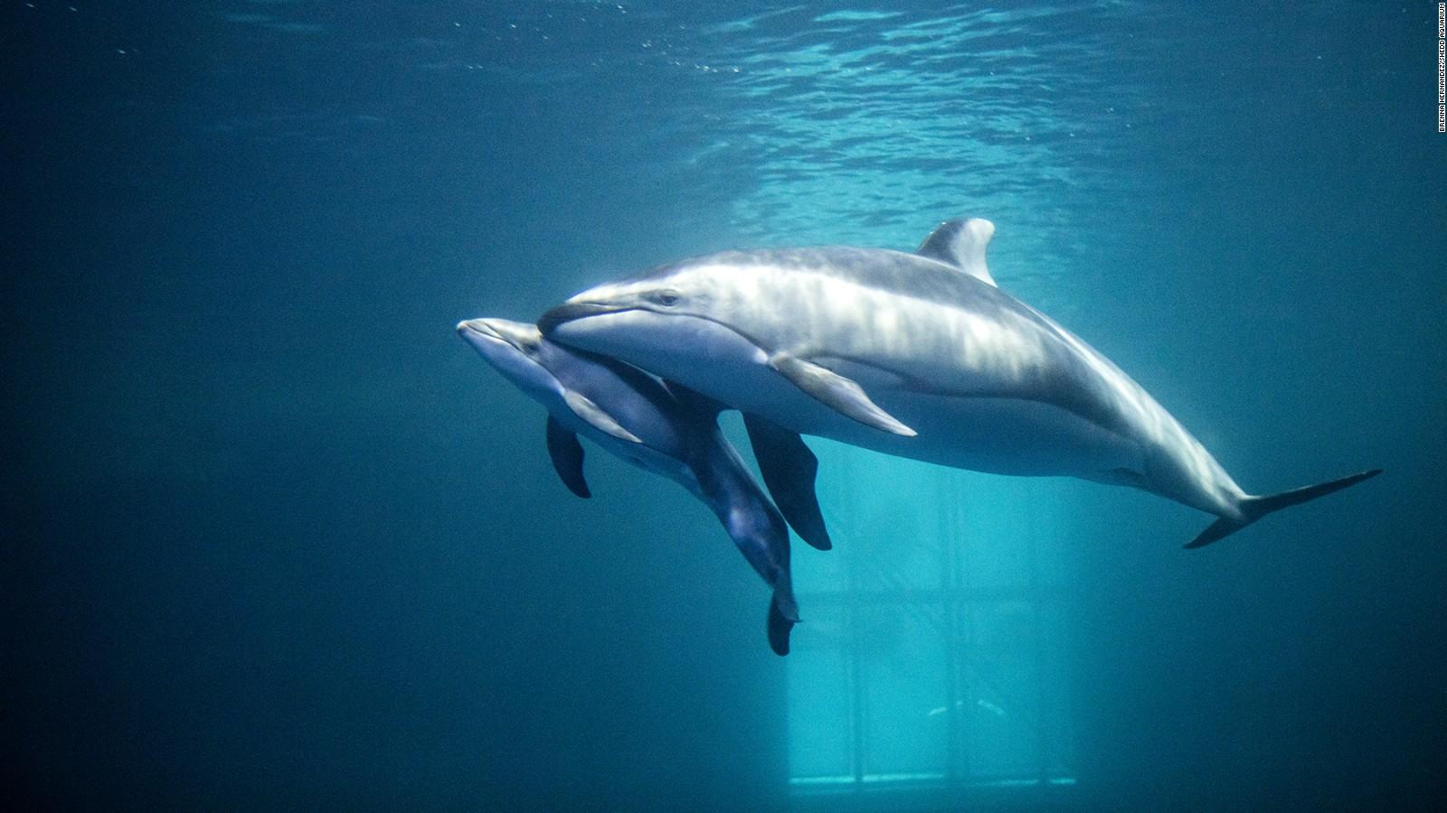 do dolphins have a spoken language cnn