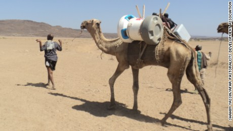 A camel carries an Arktek cooler with vaccines to reach remote populations in Ethiopia.