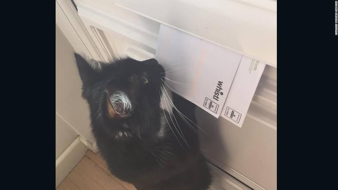 Bad kitty! Royal Mail warns family after cat attacks