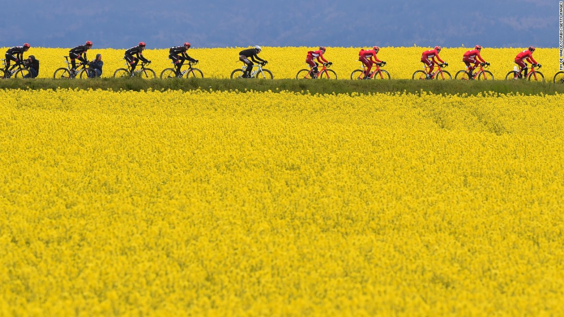 "The peloton cruises by a flower field in Geneva, Switzerland, during the fifth stage of the Tour de Romandie on Sunday, May 1. <a href=""http://www.cnn.com/2016/04/26/sport/gallery/what-a-shot-sports-0426/index.html"" target=""_blank"">See 29 amazing sports photos from last week</a>"