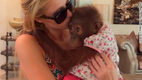 Paris Hilton poses with an orangutan on her Instagram account.