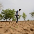 GettyImages-526701826India drought