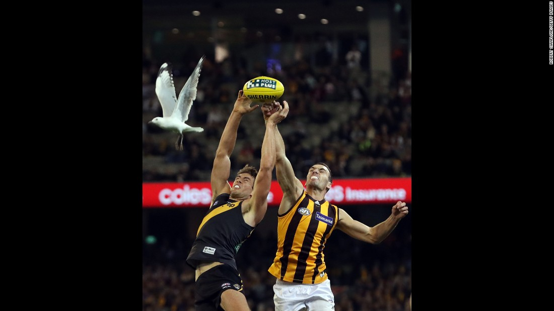 A bird flies by Shawn Hampson of the Richmond Tigers, left, and Hawthorn's Jonathon Ceglar during an Australian Football League match in Melbourne on Friday, May 6.