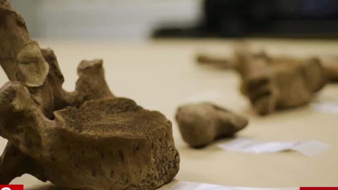 Mastodon bones offer clues of earliest humans in North America