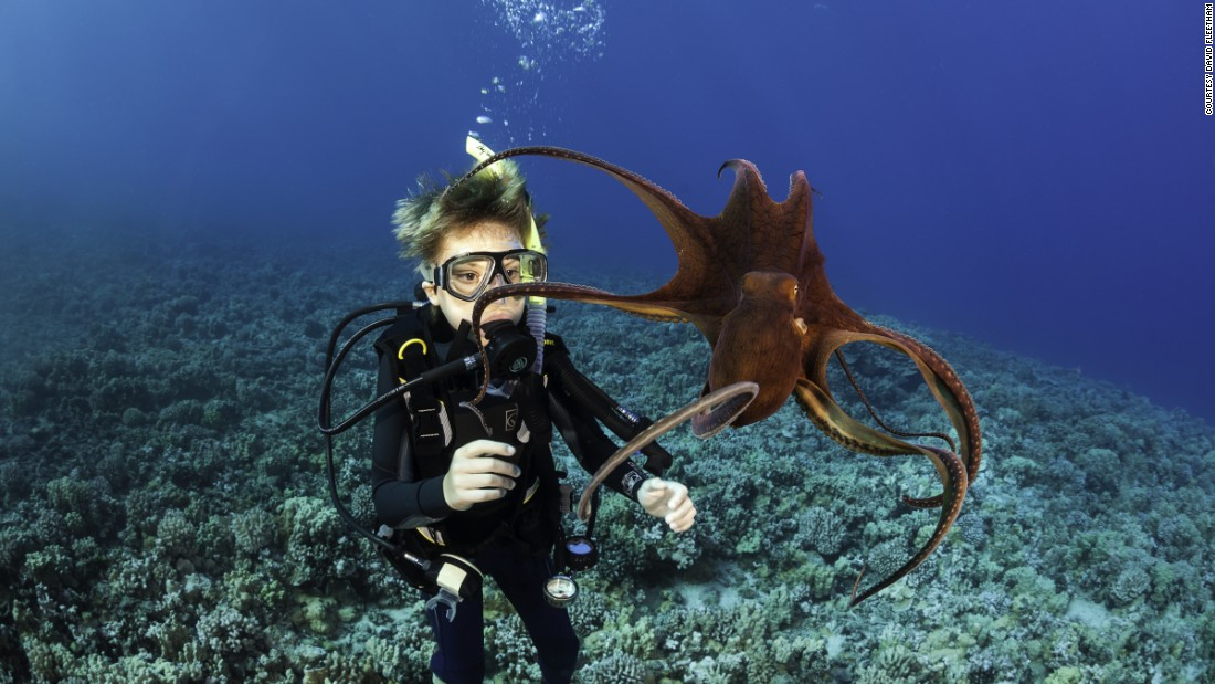 Eleven-year-old Sean Fleetham gets his first look at a day octopus, also known as the big blue octopus or octopus cyanea, off Maui, Hawaii.