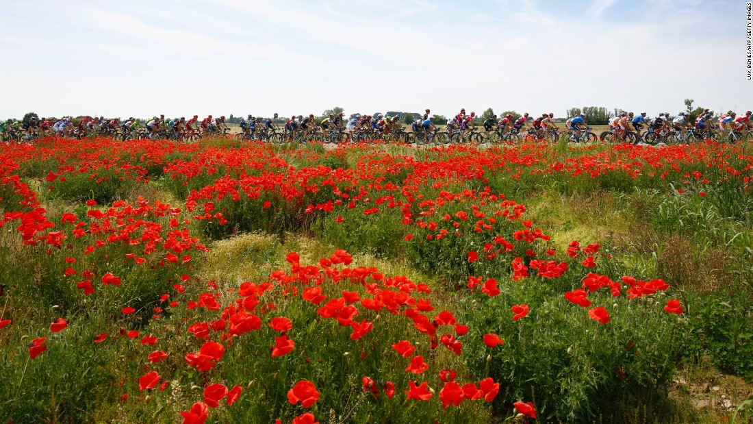 The peloton rides past a field of poppies during the 11th stage of the 99th Giro d'Italia, Tour of Italy, from Modena to Asolo on May 18.