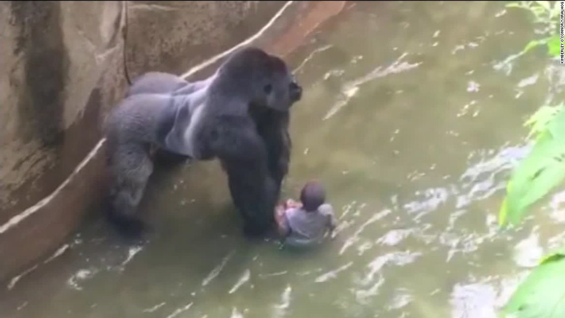 Witnesses Describe Screams Shots At Gorilla Enclosure Cnn