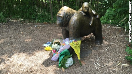 After gorilla death, try empathy -- not blame