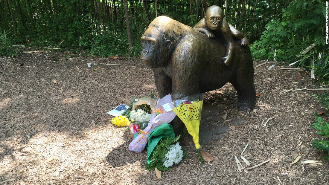 'We'd make the same decision,' zoo director says of gorilla shooting