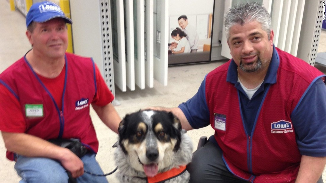 lowes hires man and his service dog cnn With lowes hires service dog