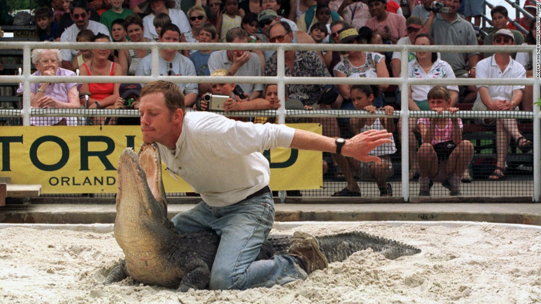 Florida is home to 1.3 million alligators, an animal that is no doubt dangerous, but one that has become a central part of the state's identity. Here, a man wrestles an alligator at the Gatorland theme park in Orlando in 2000.