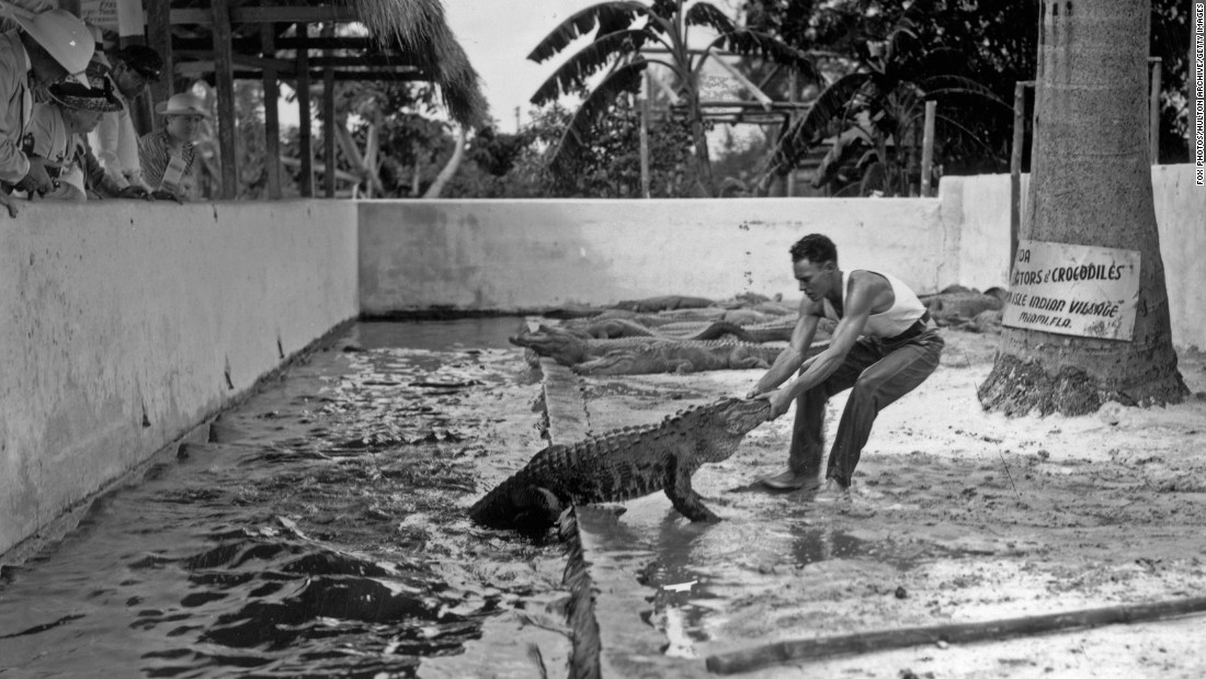 A man pulls an alligator out of the water at an alligator farm in Miami in 1938.