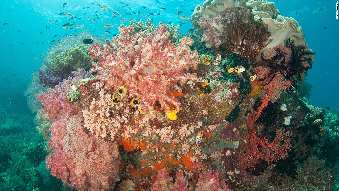Each outcrop of rock provides a place for coral to gather and grow, with numerous species all vying for space and managing to coexist together.<br />