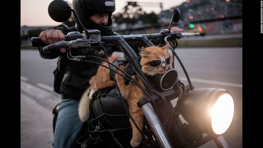 <strong>June 19:</strong> A cat rides on a motorcycle in Rio de Janeiro. The man in the photo said he always rides with his cat.