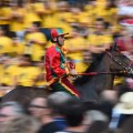 siena horses blurred crowd