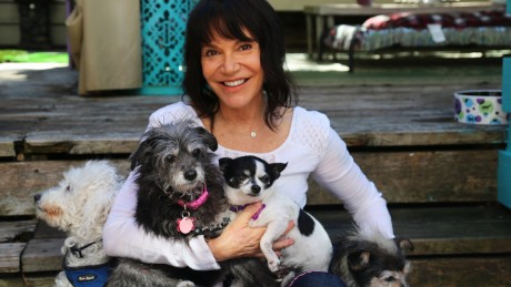 Sherri Franklin started Muttville in 2007 out of her home to help aging dogs get adopted into loving homes