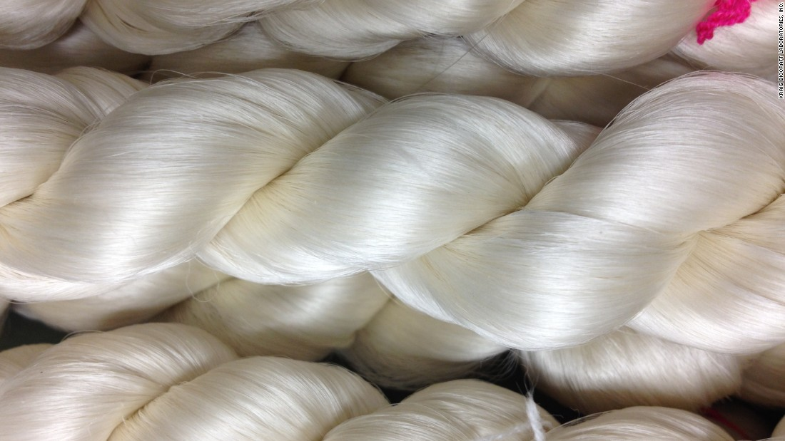 A coil of spider silk, which is five times as strong as the same weight of steel. Experts believe it is more flexible than and almost as tough as the synthetic fiber Kevlar.