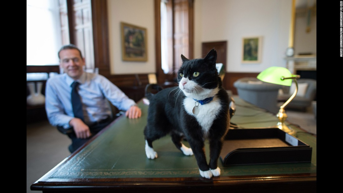 Much like Gladstone, Palmerston was also a stray cat recruited from the Battersea Dogs and Cats Home in south London.