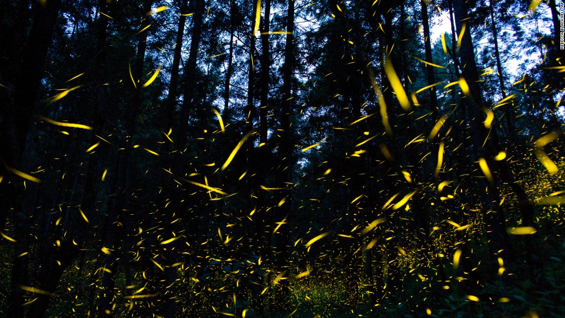Are fireflies flickering out?