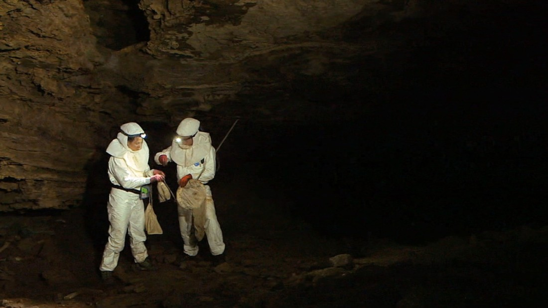 The researchers from the University of Pretoria and the Centers for Disease Control and Prevention (CDC) are tracking animals all around the world to create an early-warning system for diseases that could affect humans. Here, they hunt for bats inside Grootboom cave.