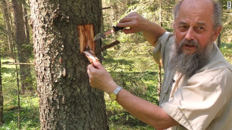 Forester Andrzej Antczak, says these spruce trees need to be cut down to stop the spread.