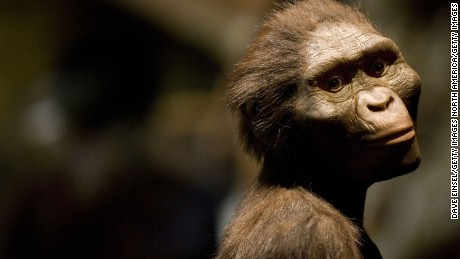 Don't tell 'Lucy,' but modern-day apes may be smarter than our evolutionary ancestors, 科学者は言う
