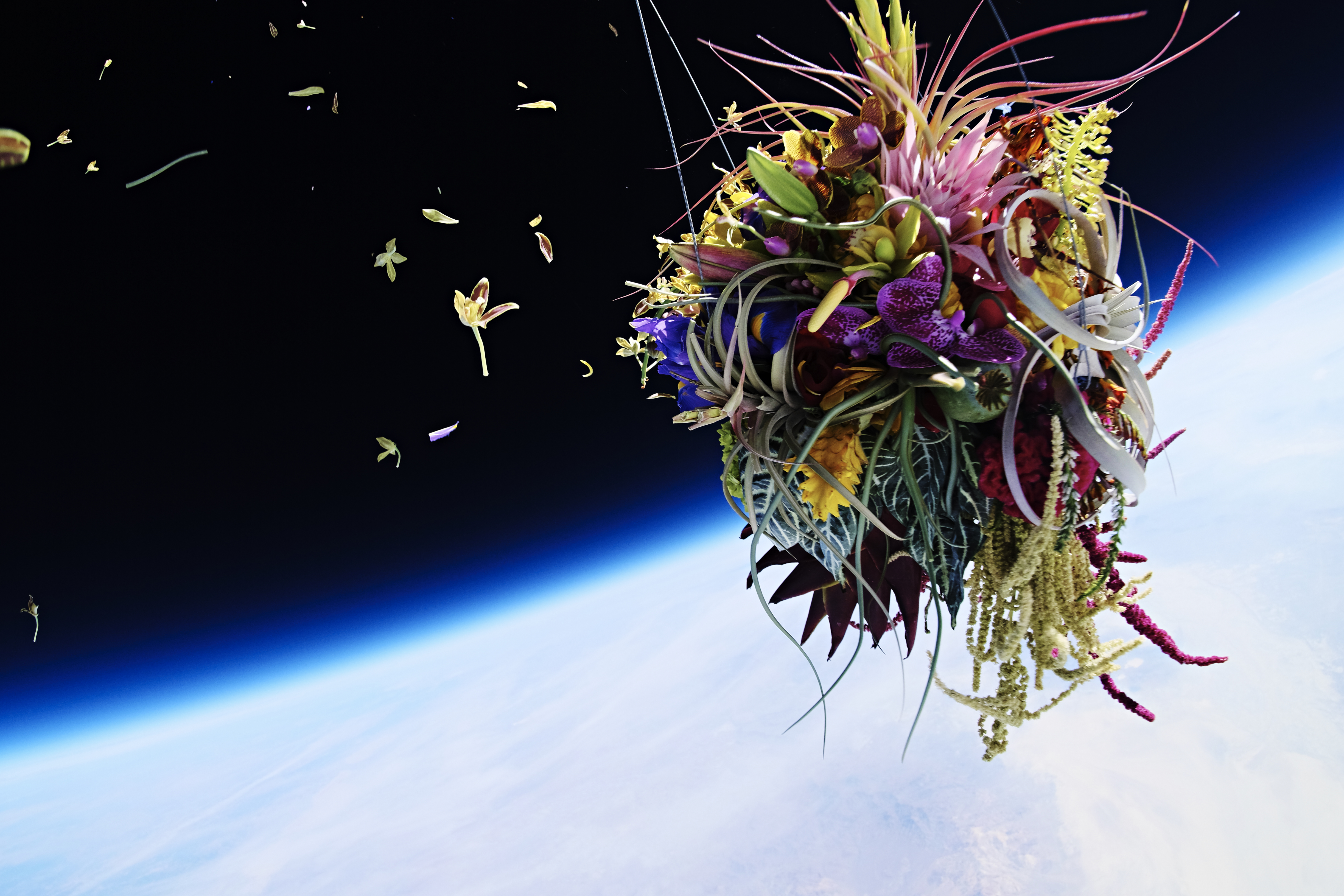 Turning Bonsai And Bouquets Into Space Age Art Cnn Style